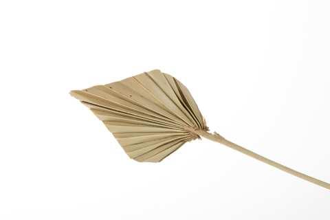 Palm spear mini