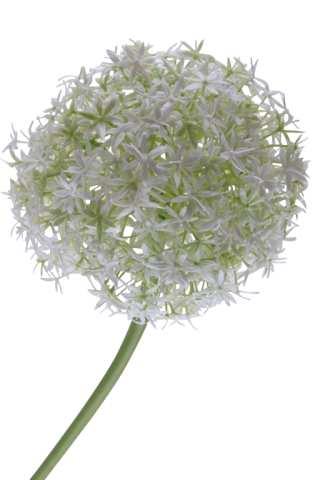 Allium Kunststoff