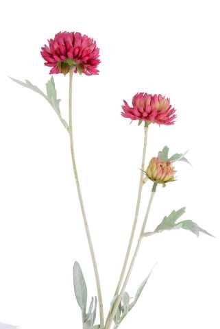 Zweig Chrysantheme