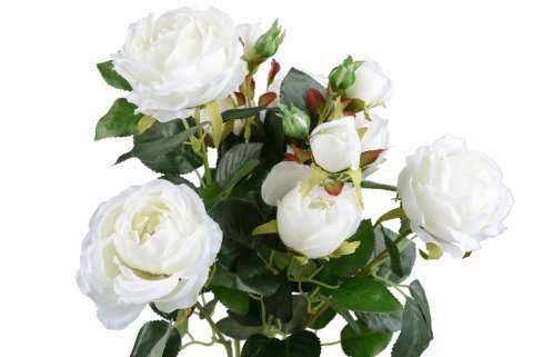 Rosenbusch 10 Blüten