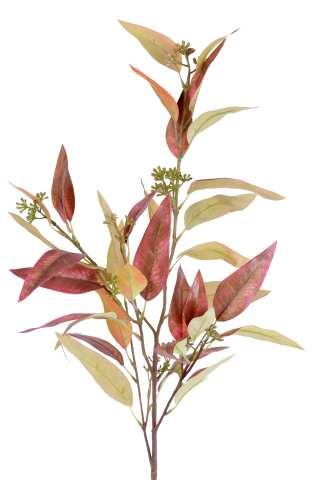 Eukalyptus mit Blüte