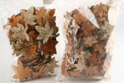 Ahornblätter Birke