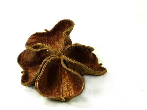 Land lotus full flower