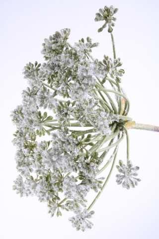 Allium beeist
