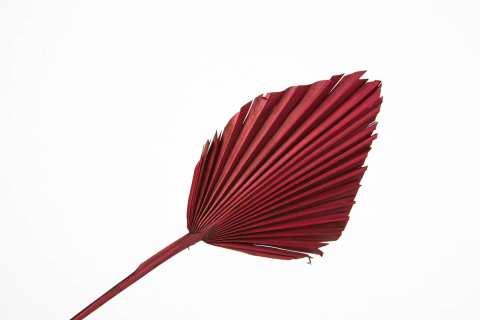 Palm Spear