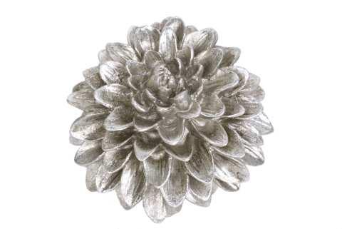 Chrysanthemenkopf, Poly