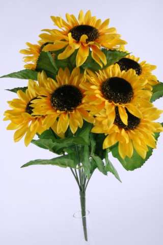 Sonnenblumenbusch, 9 Blüten